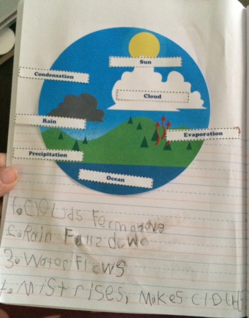 Water Cycle (Rainforest Study)