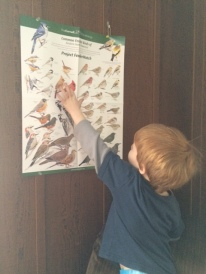 Our new bird poster, next to our huge picture window!